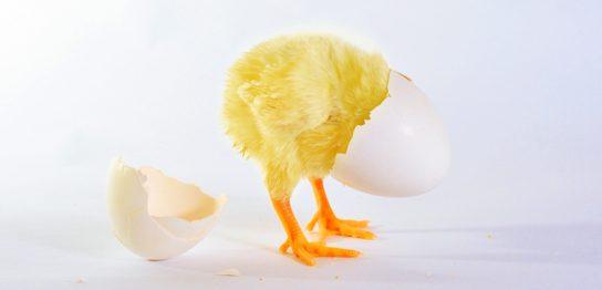 鶏と卵はわからなくても販促はお店が先です